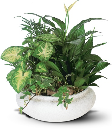 Medium Dish Garden in ceramic container